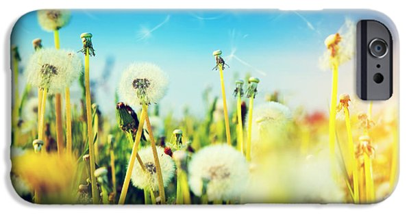 Flora iPhone Cases - Spring field with flowers dandelions in fresh grass iPhone Case by Michal Bednarek