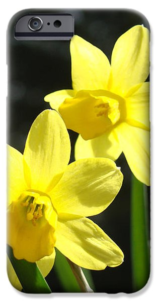 Spring Floral art prints Glowing Daffodils Flowers iPhone Case by Baslee Troutman Fine Art Photography
