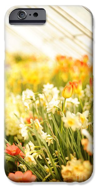 Spring iPhone Cases - Spring Flowers iPhone Case by HD Connelly