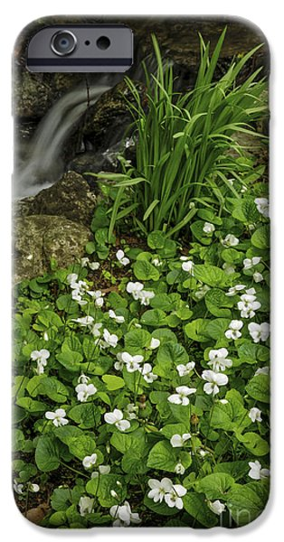 Creek iPhone Cases - Spring flowers near creek iPhone Case by Elena Elisseeva