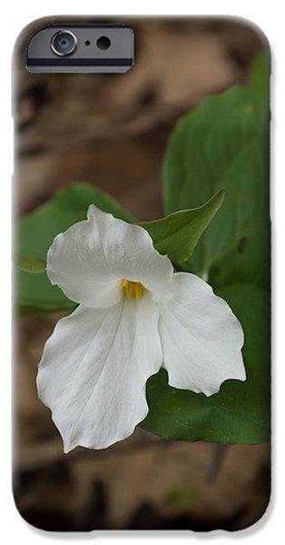 Flower Of Life iPhone Cases - Spring Forest Walk Treasures - White Trillium Flower iPhone Case by Georgia Mizuleva