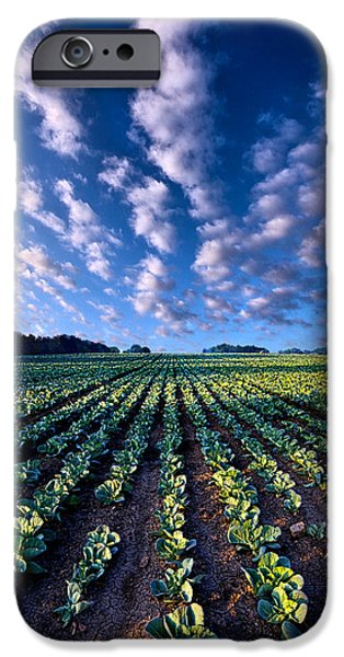 Morning iPhone Cases - Spring Fresh iPhone Case by Phil Koch
