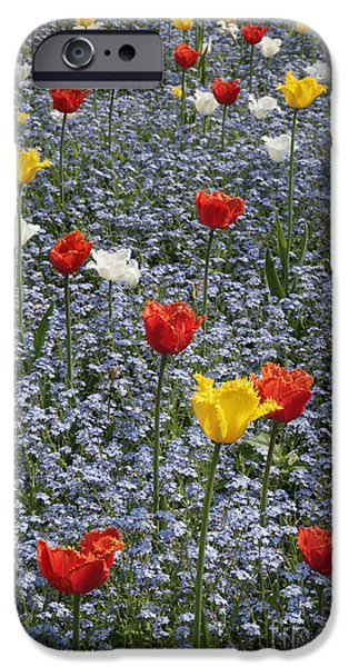 Swindon iPhone Cases - Spring  Garden  iPhone Case by Paul Felix