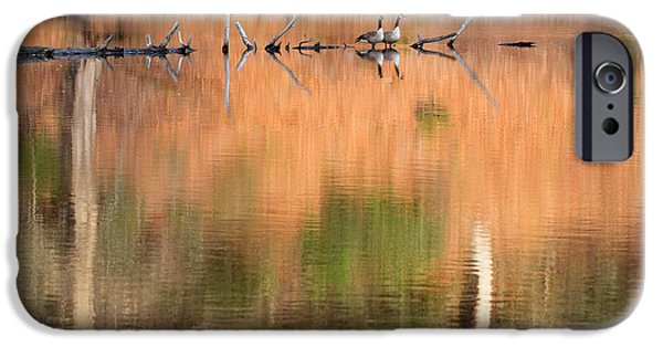 Geese iPhone Cases - Spring Geese iPhone Case by Bill  Wakeley