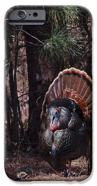 Eastern Wild Turkey iPhone Cases - Spring Gobbler iPhone Case by Ronald Lutz