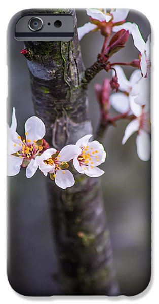 Old And New iPhone Cases - Spring Has Sprung iPhone Case by Shelby  Young
