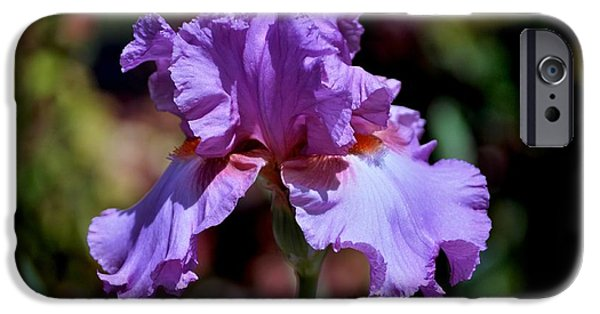 Hallmark Greeting Card iPhone Cases - Spring Iris Bloom iPhone Case by Kristina Deane