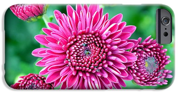 Botanical iPhone Cases - Spring It On iPhone Case by Deena Stoddard