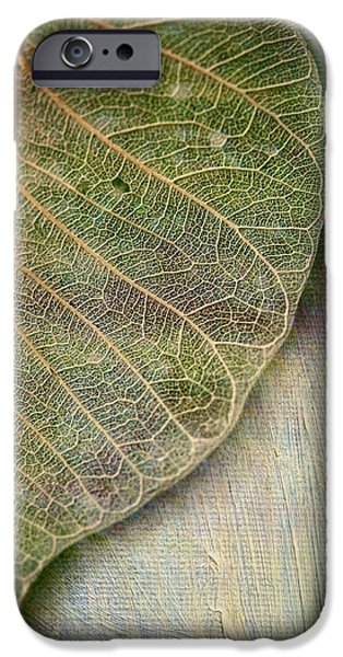 Leaves iPhone Cases - Spring Leaf iPhone Case by Bonnie Bruno