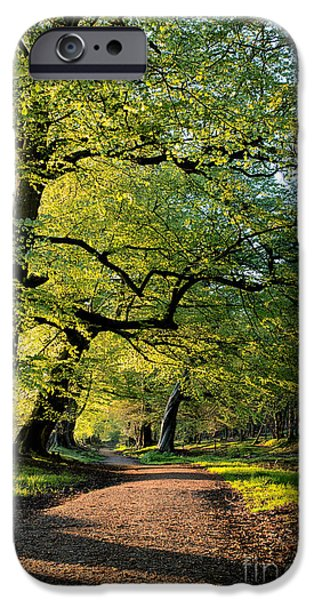 Pathway iPhone Cases - Spring Light  iPhone Case by Tim Gainey