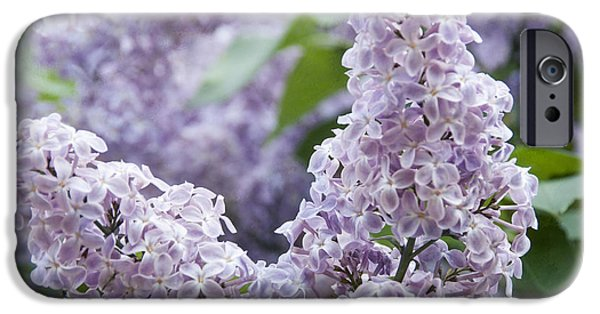 Blooming Photographs iPhone Cases - Spring Lilacs in Bloom iPhone Case by Juli Scalzi