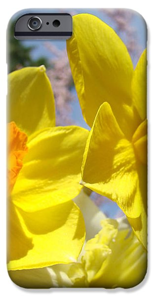 Spring Orange Yellow Daffodil Flowers art prints iPhone Case by Baslee Troutman