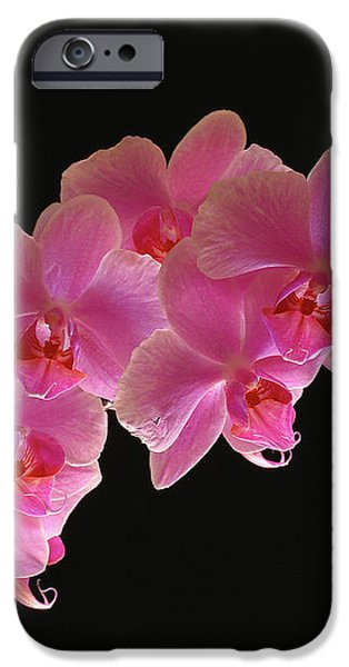 Spring Orchids iPhone Case by Juergen Roth