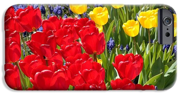 Garden iPhone Cases - Spring Sunshine iPhone Case by Carol Groenen