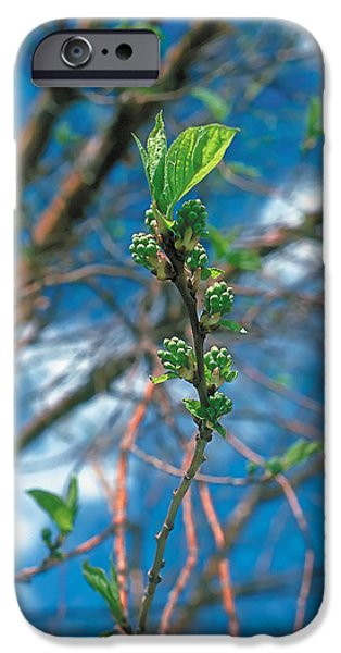 Recently Sold -  - Wintertime iPhone Cases - Spring iPhone Case by Terry Reynoldson