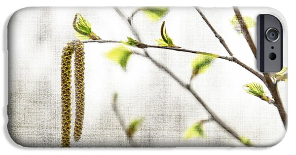 Spring iPhone Cases - Spring tree branch iPhone Case by Elena Elisseeva