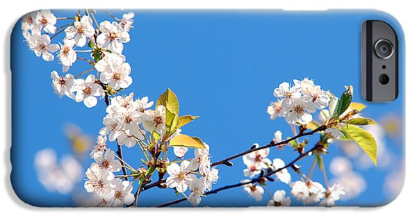 Youthful Photographs iPhone Cases - Spring tree iPhone Case by Michal Bednarek