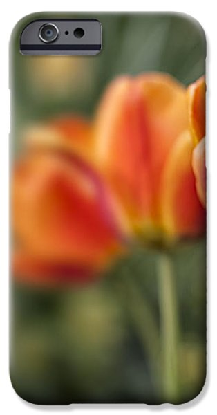 Spring Tulips iPhone Case by Adam Romanowicz