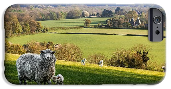 Sheep iPhone Cases - Spring View iPhone Case by Ian Hufton