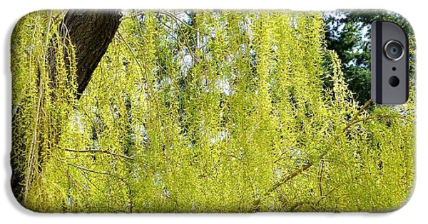 Willow Lake iPhone Cases - Spring Weeping Willow iPhone Case by Will Borden