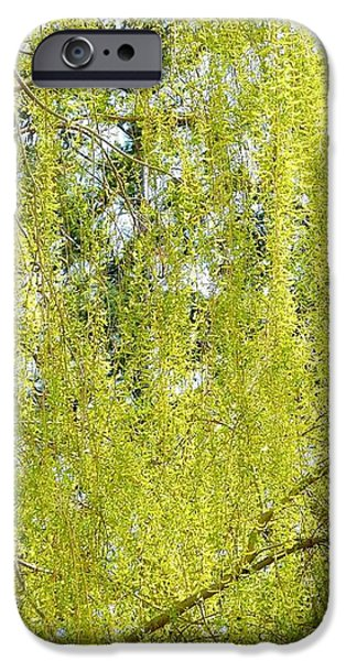 Spring Weeping Willow iPhone Case by Will Borden
