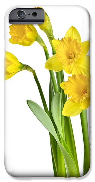 Plant iPhone Cases - Spring yellow daffodils iPhone Case by Elena Elisseeva