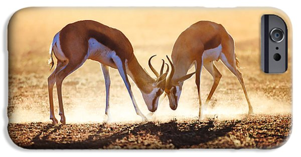 Dust* iPhone Cases - Springbok dual in dust iPhone Case by Johan Swanepoel
