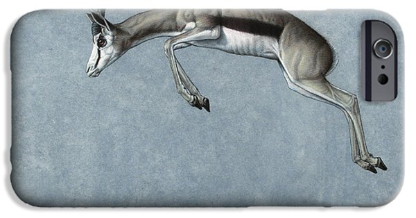 Animals Drawings iPhone Cases - Springbok iPhone Case by James W Johnson