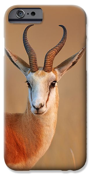 Close iPhone Cases - Springbok  portrait iPhone Case by Johan Swanepoel