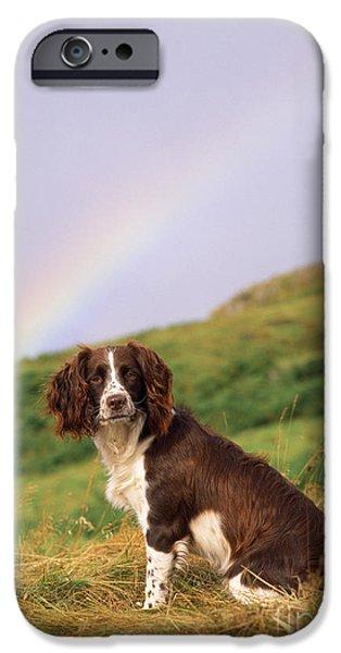 Springer Spaniel iPhone Cases - Springer Spaniel Dog iPhone Case by James Marchington