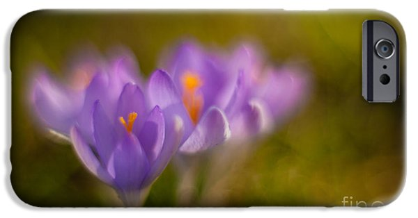Poetic Photographs iPhone Cases - Springs Delicate Richness iPhone Case by Mike Reid