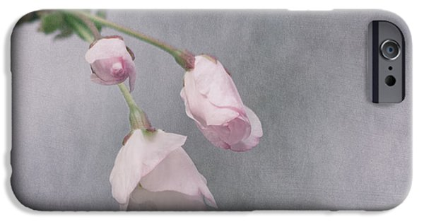 Cherry Blossoms iPhone Cases - Springs Promise iPhone Case by Kim Hojnacki