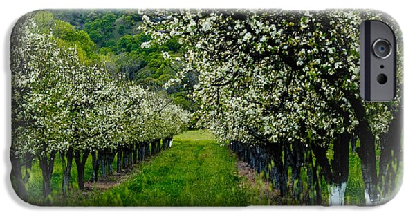 Bill Gallagher iPhone Cases - Springtime in the Orchard iPhone Case by Bill Gallagher