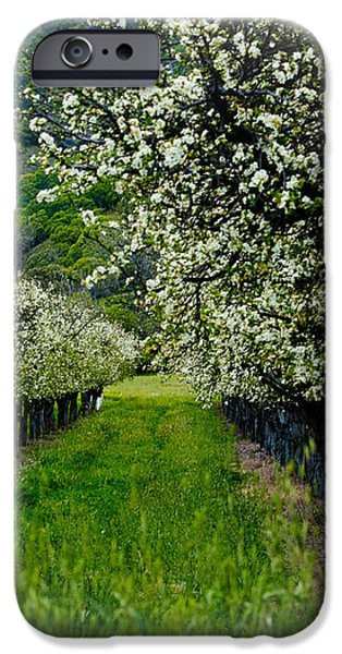 Springtime in the Orchard iPhone Case by Bill Gallagher