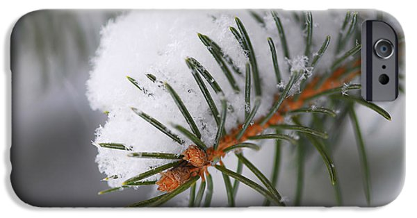 Snowy iPhone Cases - Spruce branch with snow iPhone Case by Elena Elisseeva