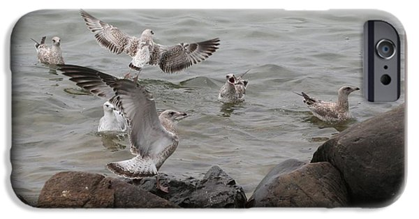 Canandaigua Lake iPhone Cases - Squabbling Gulls iPhone Case by Patricia Overmoyer