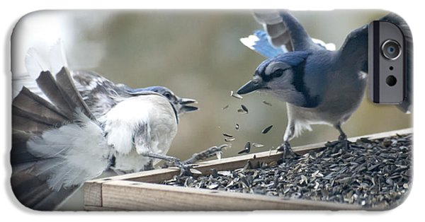 Feeding Birds iPhone Cases - Squabbling Jays iPhone Case by Ross Powell