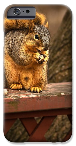 Fox Squirrel iPhone Cases - Squirrel Eating a Peanut iPhone Case by  Onyonet  Photo Studios