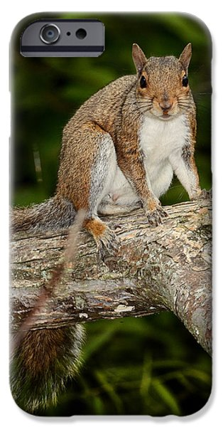 Squirrel iPhone Case by Eric Abernethy