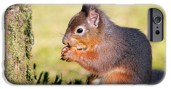 Bushy Tail iPhone Cases - Squirrel iPhone Case by Grant Glendinning
