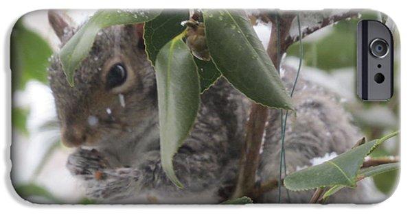 Llmartin iPhone Cases - Squirrel In Snow 1 iPhone Case by Linda L Martin