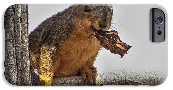 Fox Squirrel iPhone Cases - Squirrel Lunch Time iPhone Case by Robert Bales