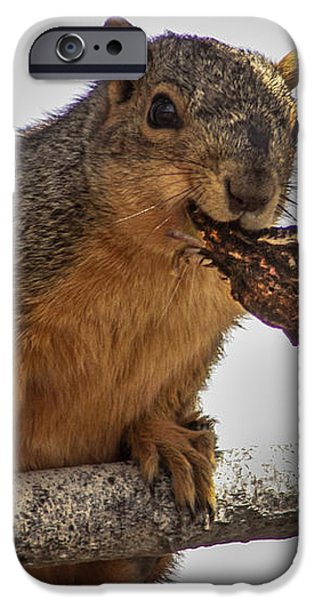 Squirrel Lunch Time iPhone Case by Robert Bales
