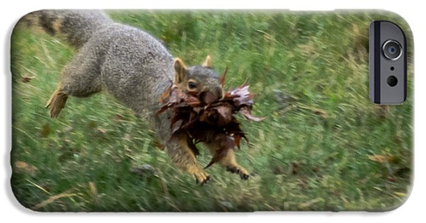 Fox Squirrel iPhone Cases - Squirrel Nest Bulding iPhone Case by Robert Bales