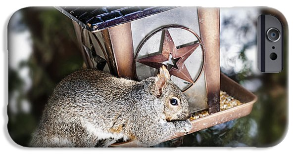 Birdhouse iPhone Cases - Squirrel on bird feeder iPhone Case by Elena Elisseeva
