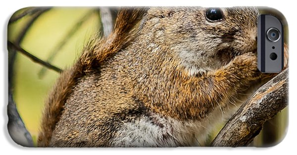 Haybale iPhone Cases - Squirrel  iPhone Case by Robert Bales