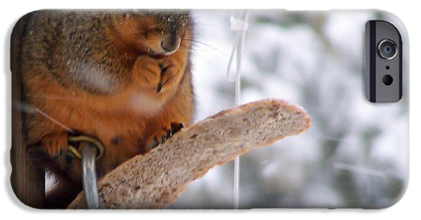 Ridgewood iPhone Cases - Squirrel Snack II iPhone Case by Jim Finch