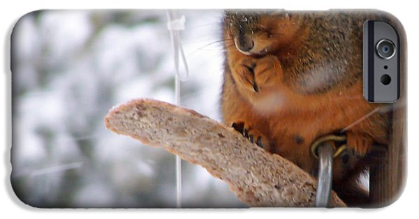 Ridgewood iPhone Cases - Squirrel Snack III iPhone Case by Jim Finch