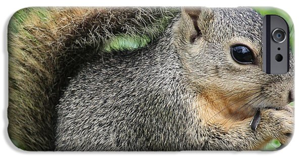 Fury iPhone Cases - Squirrel Thief iPhone Case by TN Fairey