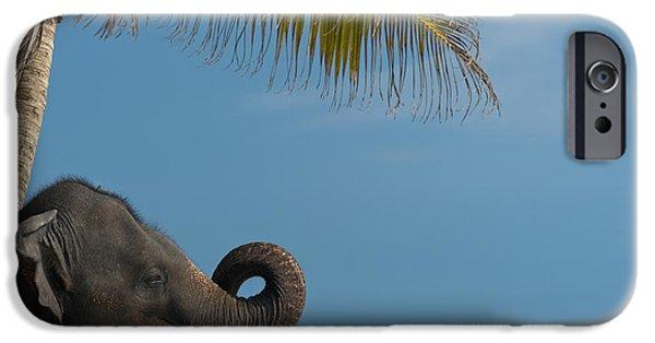 Simple Beauty In Colors iPhone Cases - Sri Lanka, Near Unawatuna, Elephant iPhone Case by Ian Cumming